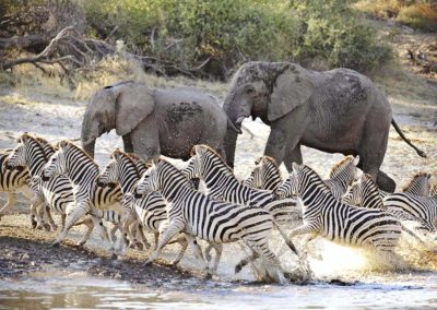 Beautiful Tours Botswana Zebra & Wildebeest Migration Meno A Kwena
