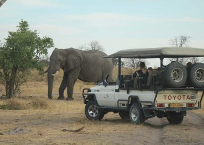 Beautiful Tours Botswana Mobile Safari Game Drive With Elephant